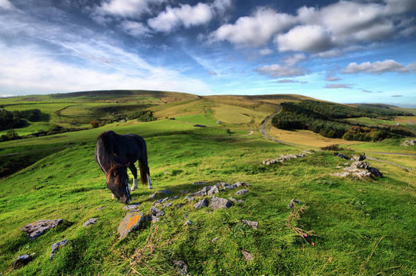 Grazing Photograph - Grazing Horse by James Ennis