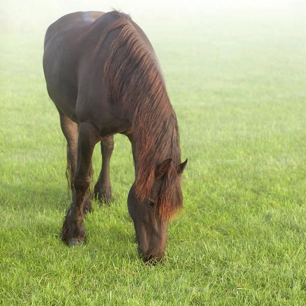 Grazing Photograph - Grazing Horse by Marcel Ter Bekke