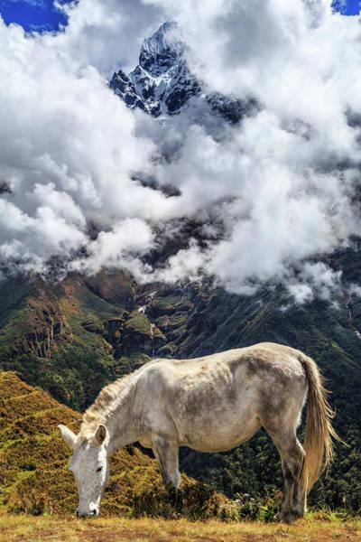 Grazing Photograph - Grazing Horse, Sagarmatha National by Feng Wei Photography
