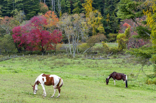 Photograph - Grazing Horses Autumn Pasture Along The Blue Ridge Parkway Nc by Terry DeLuco