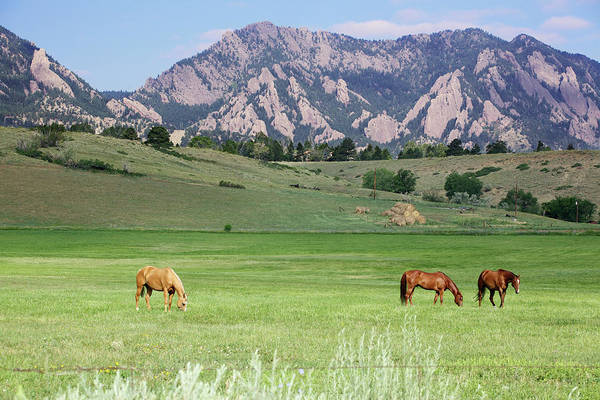 Mare Photograph - Grazing Horses by Beklaus