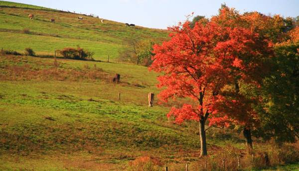 Berlin Ohio Photograph - Grazing Horses In Autumn by Dan Sproul