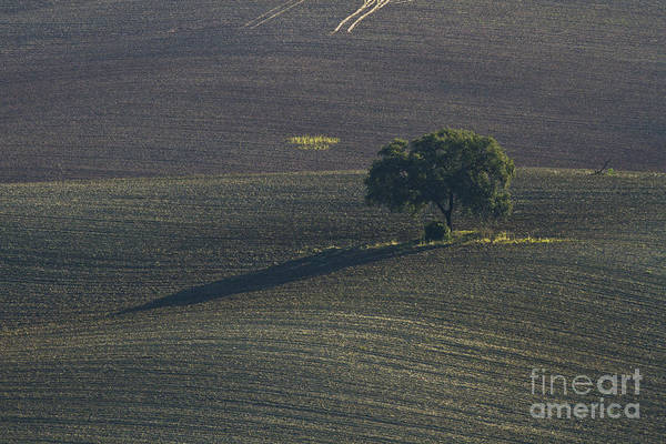 Photograph - Grazing Land In Andalusia-1 by Heiko Koehrer-Wagner