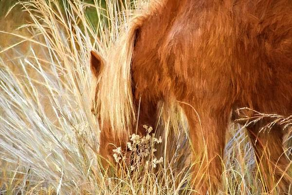 Photograph - Grazing On Beach Grasses by Alice Gipson