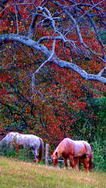 Photograph - Grazing Onto These Hills by Carol Montoya