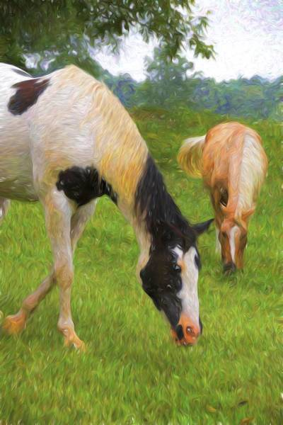 Wall Art - Photograph - Grazing Pinto by Alice Gipson