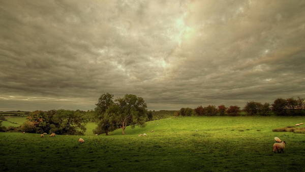 Grazing Photograph - Grazing Sheep by A Goncalves