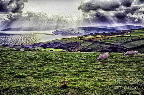 Wall Art - Photograph - Grazing Sheep Dramatic Sky by Thomas R Fletcher