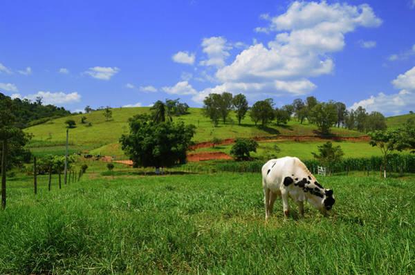Minas Gerais Wall Art - Photograph - Grazing by W Gaspar Photography