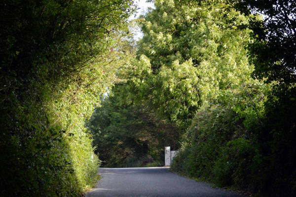 Wall Art - Photograph - Great Ambiance Road. by Terence Davis
