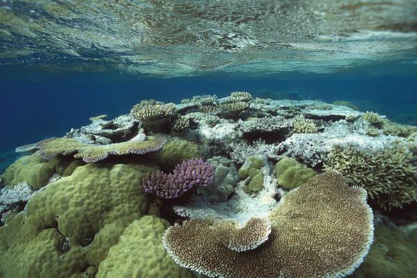 Photograph - Great Barrier Reef Near Port Douglas by Flip Nicklin