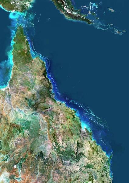 Big 5 Photograph - Great Barrier Reef by Planetobserver/science Photo Library