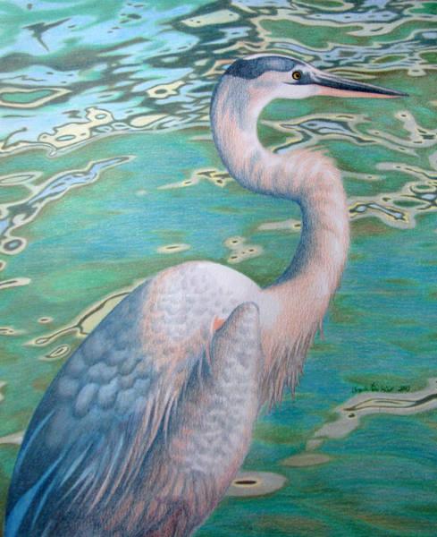 Great Blue Heron Drawing - Great Blue Heron by Angela DeRiso