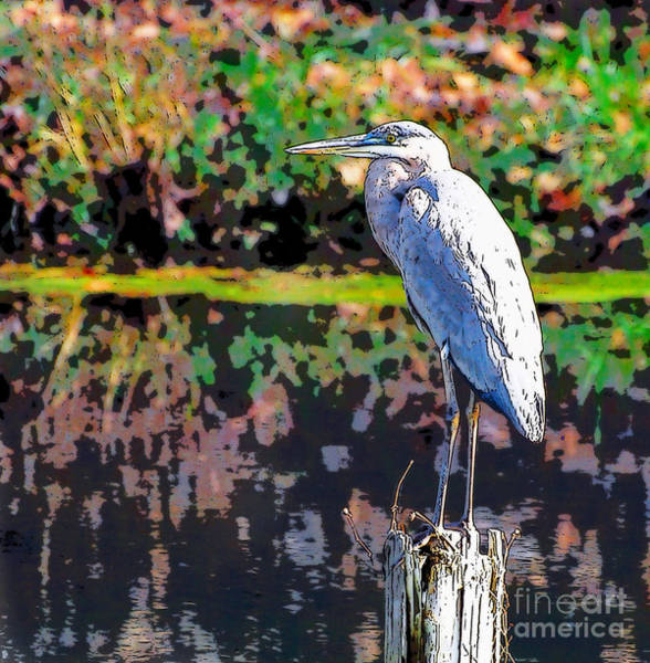 Great Blue Heron At The Pond Art Print
