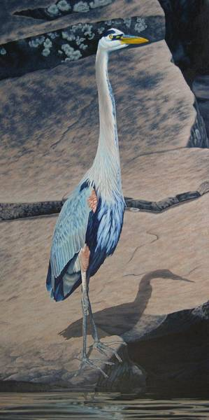 Painting - Great Blue Heron by Cheryl Fecht