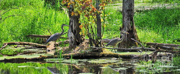 Photograph - Great Blue Heron Fishing  by Andrea Kollo