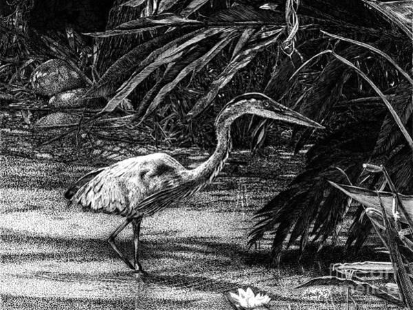 Great Blue Heron Drawing - Great Blue Heron Hunting by Douglas Hawks