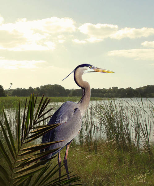 Great Blue Heron In The Bulrushes Art Print by M Spadecaller
