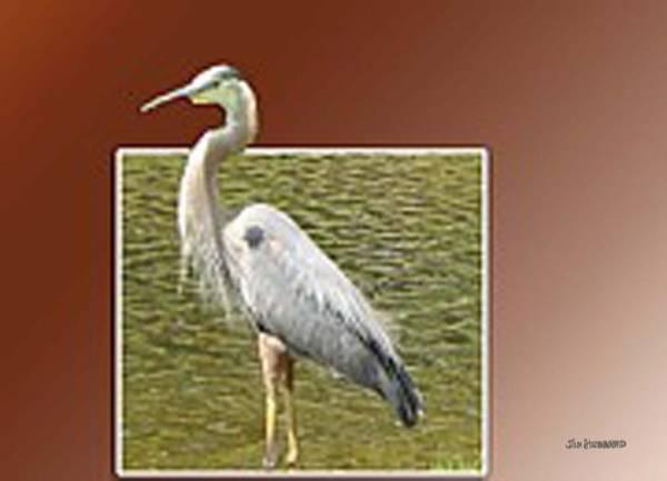 Great Blue Heron Drawing - Great Blue Heron by Jim Hubbard