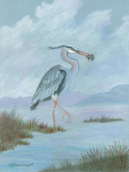 Water Foul Painting - Great Blue Heron by Sara Davenport