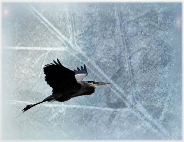 Photograph - Great Blue In Flight 3 by Marty Koch
