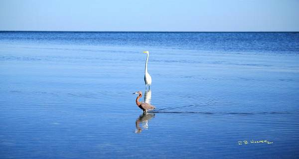 Photograph - Great Egret And Little Red Egret by R B Harper
