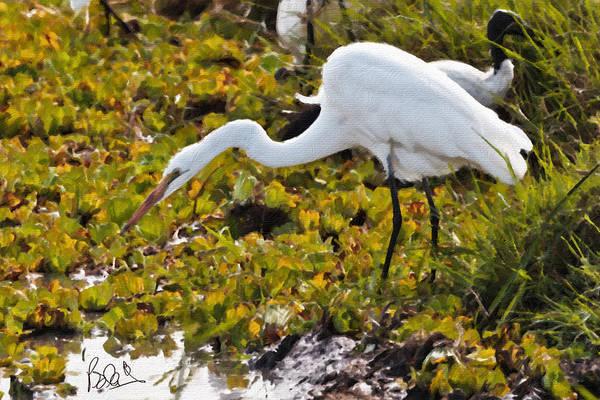 Photograph - Great Egret by Perla Copernik