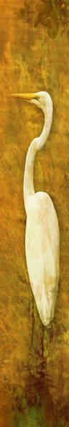 Photograph - Great Egret White Egret Tall Golden by Bob Coates