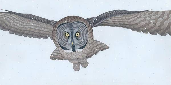 Snow Owl Painting - Great Gray Owl by Nathan Marcy
