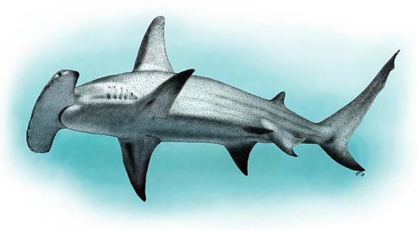 Hammerhead Photograph - Great Hammerhead Shark by Roger Hall