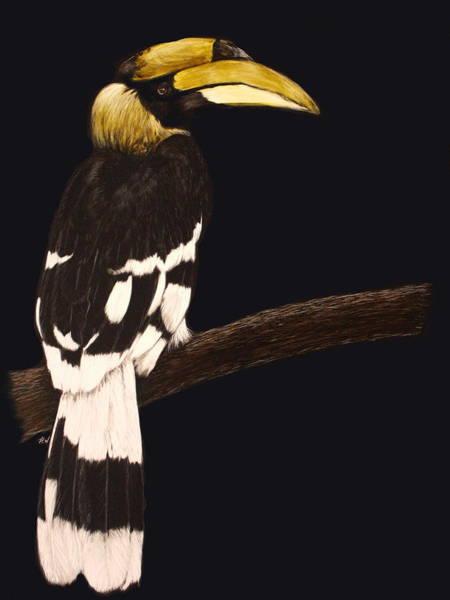 Hornbill Drawing - Great Hornbill by Heather Ward