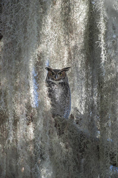 Blye Photograph - Great Horned Owl by Kenneth Blye