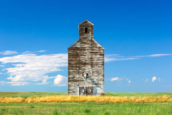 Photograph - Great Plains Sentinel by Todd Klassy