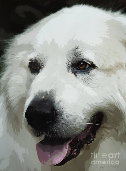 Great Pyrenees Photograph - Great Pyrenees by Nancy Stein