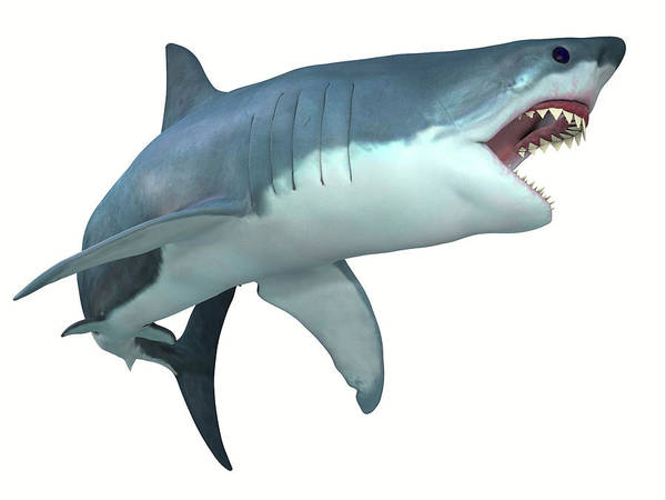 Wall Art - Photograph - Great White Shark Illustration by Corey Ford