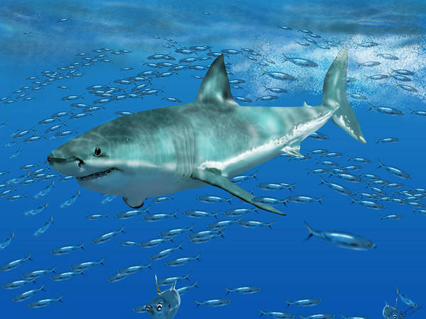 Digital Art - Great White Shark by Nigel Follett
