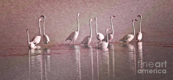 Photograph - Greater Flamingos by Heiko Koehrer-Wagner