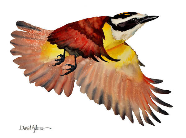 Wall Art - Painting -  Da125 Greater Kiskadee By Daniel Adams by Daniel Adams