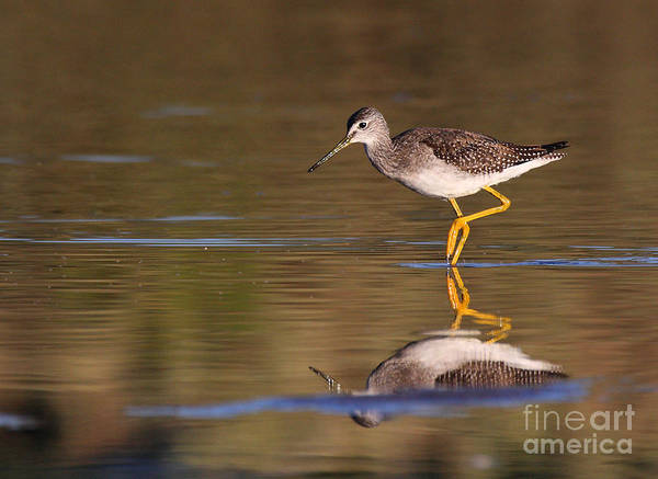 Wall Art - Photograph - Greater Yellow Legs by Ruth Jolly