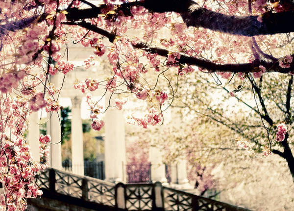 Photograph - Grecian Spring by Jessica Jenney
