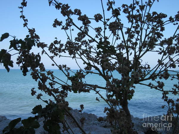 Photograph - Green And Blue by Chani Demuijlder
