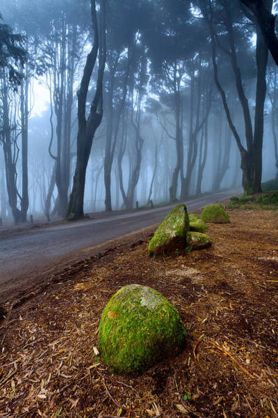 Sintra Photograph - Green And Blue by Jorge Maia