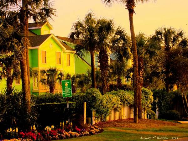 Photograph - Green Beauty At Isle Of Palms by Kendall Kessler