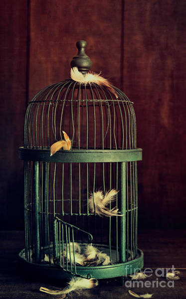 Photograph - Green Birdcage With Feathers by Sandra Cunningham