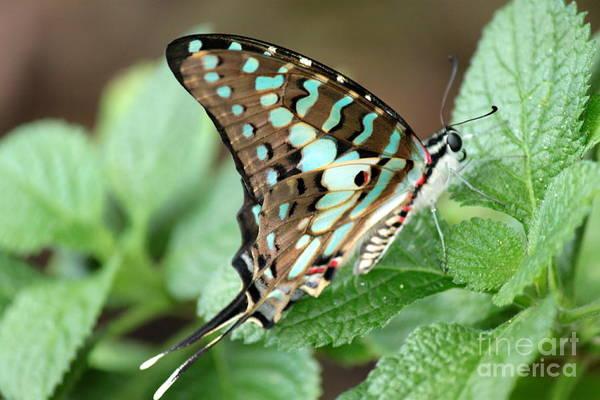 Wall Art - Photograph - Green-blue Swallowtail Butterfly 1 by Eric Irion