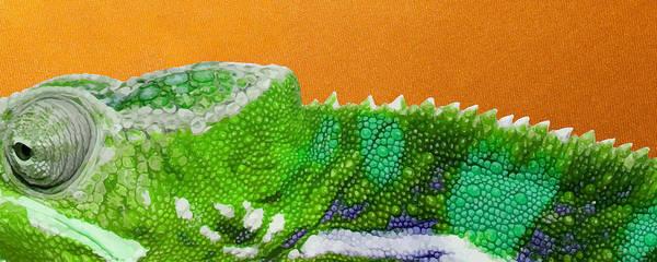 Digital Art - Green Chameleon On Orange by Serge Averbukh