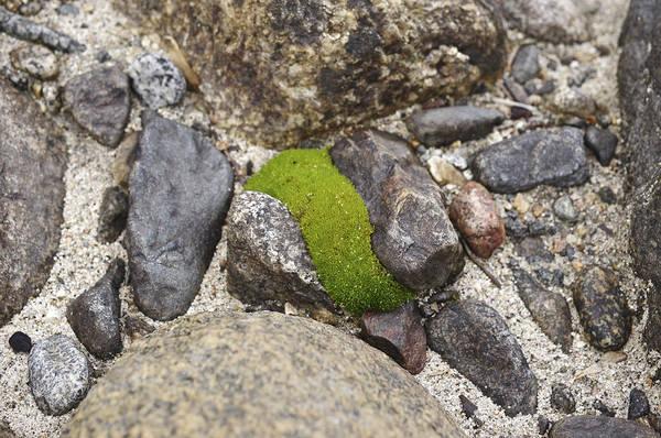 Photograph - Green Curve by Priya Ghose