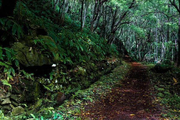 Photograph - Green Earth by Edgar Laureano