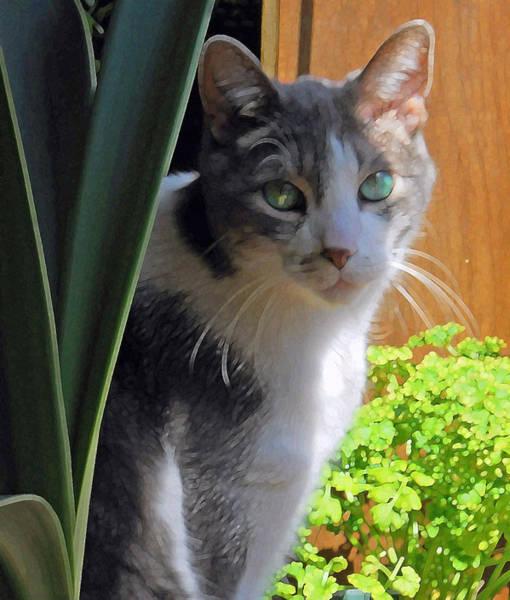 Photograph - Green Eyed Cat by Lynn Hansen