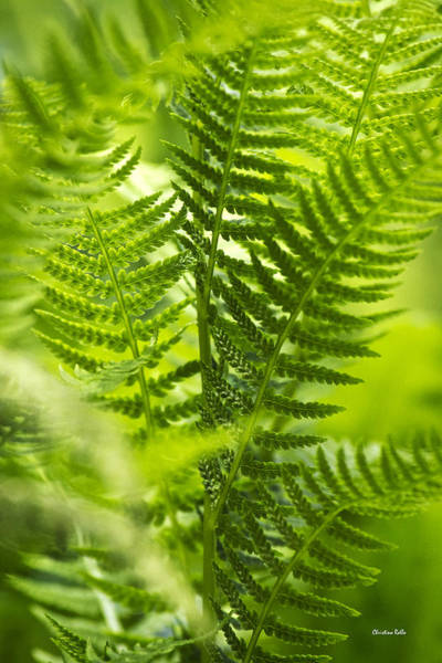 Photograph - Green Fern Art by Christina Rollo